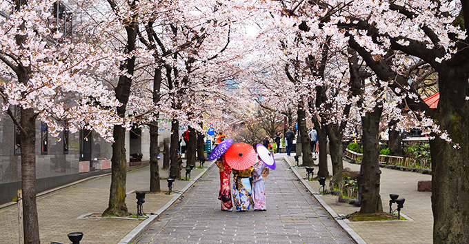 Visiting Kyoto during the cherry blossom (Sakura) period is a unique experience.
